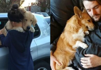1M+ unmistakable Signs Dog Really is best friend of Human –  Cute moments dog and owner compilation