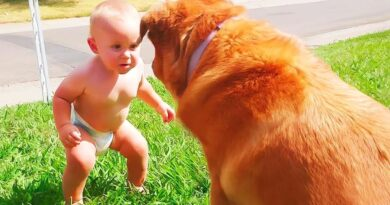 Funny Babies Playing With Dogs And Cats #6 – Funny Baby Actions